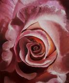 Rose 2, Öl auf Leinwand, 25 x 30 cm