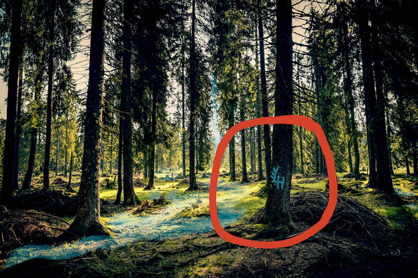 """Bringt euer """"Stück Wald"""" ins SG1!"""