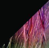 Kunst in der sozialen Isolation Xponate - Detail der Woche